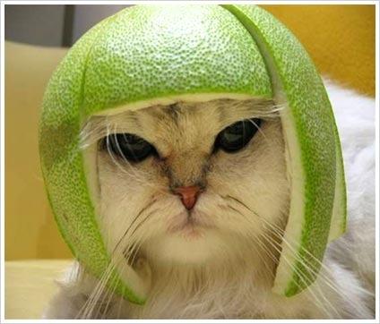 funny-cat