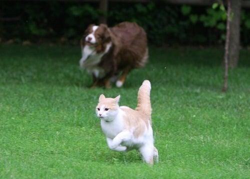 herdingcats_thumb[2]